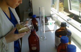 Investigación comprueba efecto analgésico de la manzanilla